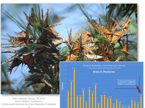Monarch Population in Mexico