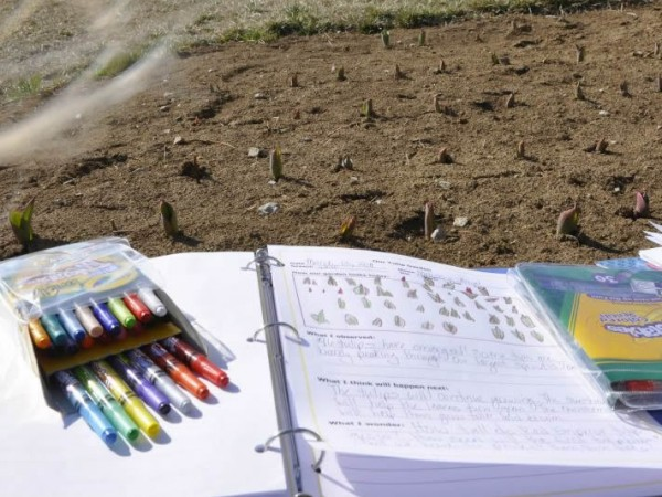 Using a notebook to record changes in the garden