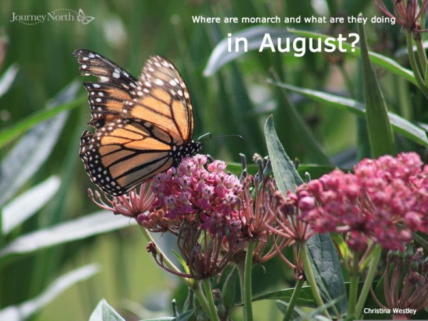 Monarchs in August