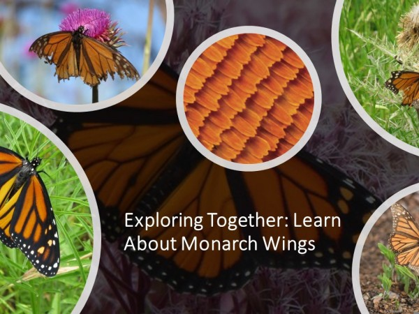 exploring together: wings over time