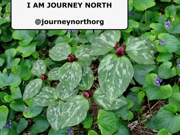 "I am Journey North ""patch of planet"" photo"