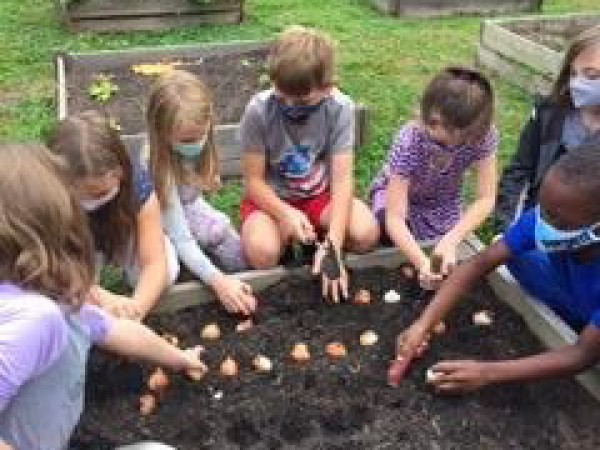 Planting tulip bulbs in South Carolina.